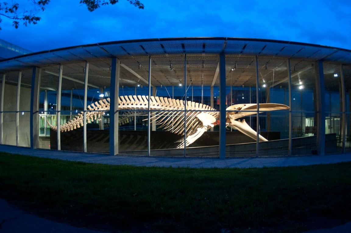 blue whale from outside