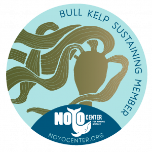 Bull Kelp Decal
