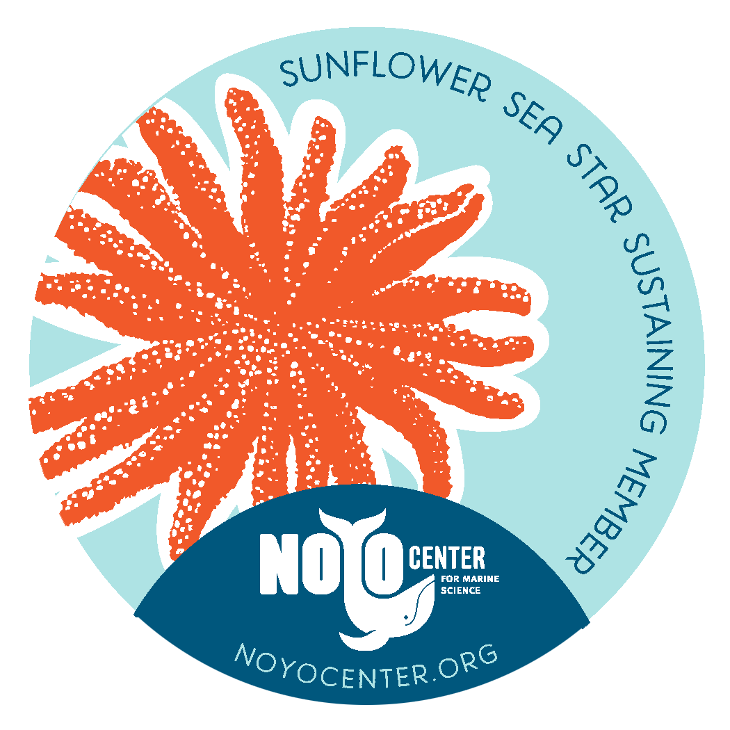 Sunflower Sea Star Sustaining Membership